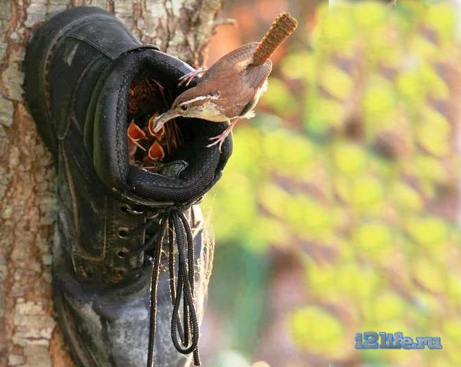 Гнездо для птиц из обуви